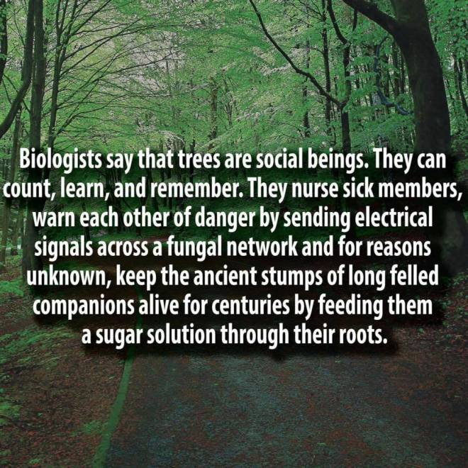 Tree Wisdom_10649491_10156478628940538_523982086236721456_n