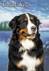 bernese-thank-you-card