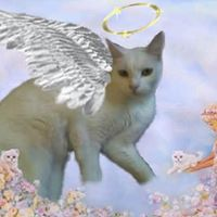 Cat With Wings and Halo_269982_1863207135312_5722239_n