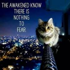 Cat_The Awakened Know No Fear