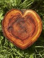 Heart Shaped Cut Down Tree Trunk 2