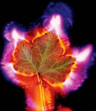 Kirlian Photo of Leaf 3_99aaaf2942b58abf03afb8a8791261bc